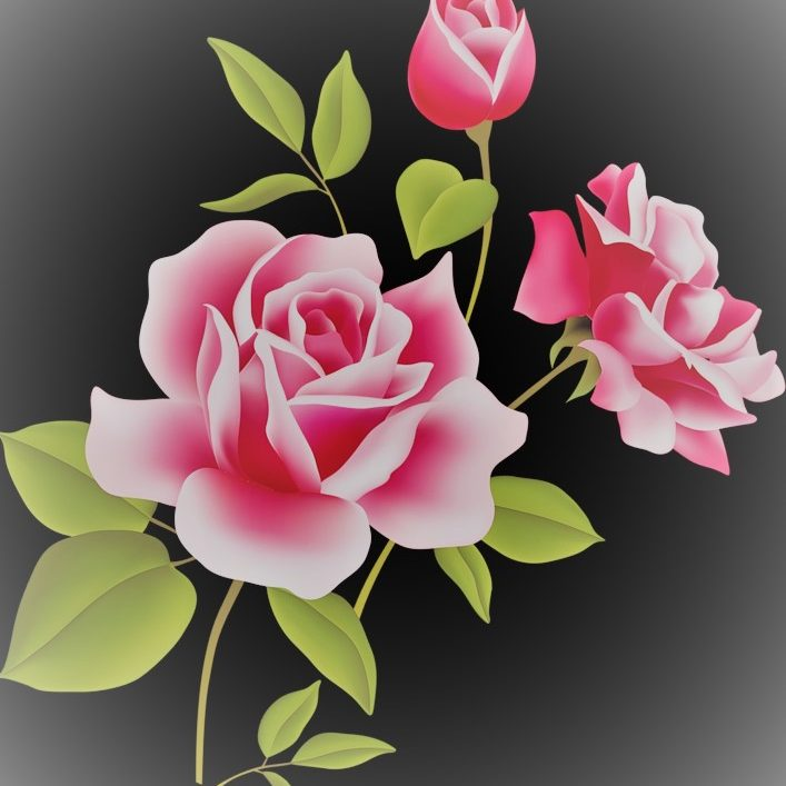 Pink Rose Picture 2